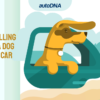 Travelling with a dog in the car – how to transport your pet?